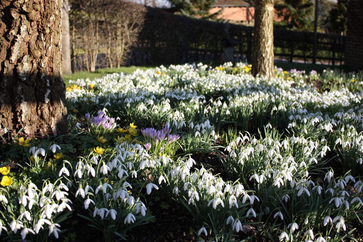 Spring Platt Garden