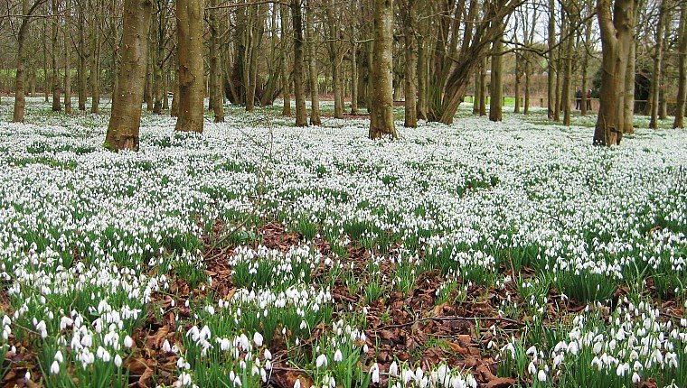 Spotting Snowdrop Species National Garden Scheme