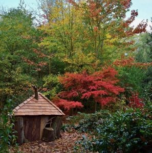 Woodland autumn garden