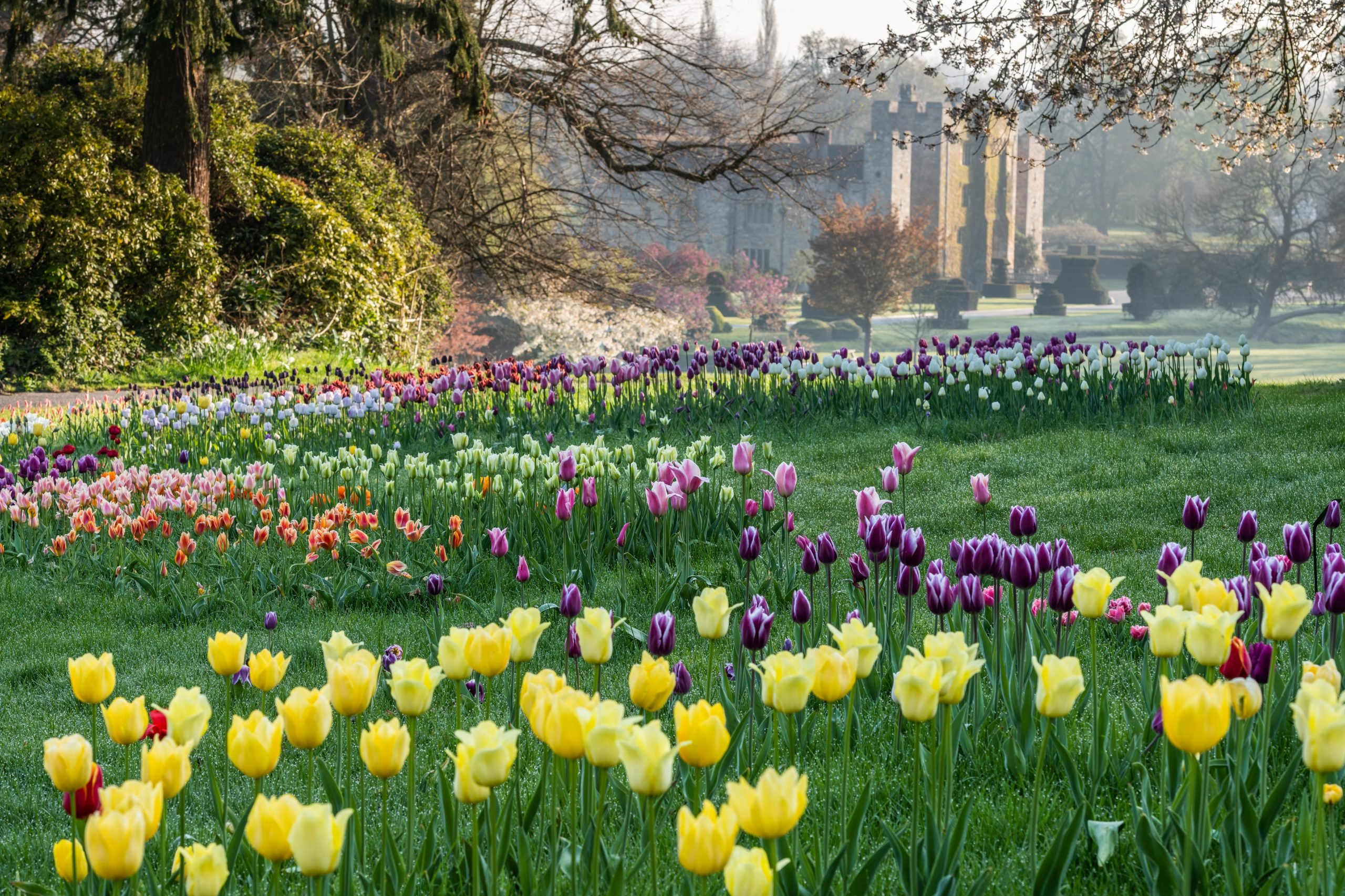 Tulips and castle