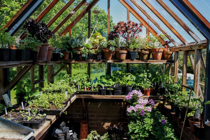 Greenhouse full of plants and pots in spring