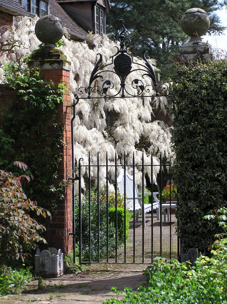 Wisteria at Weston Hall Hereford