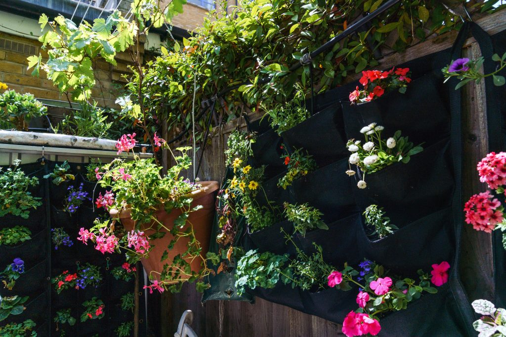 Living wall and hanging baskets in an urban garden