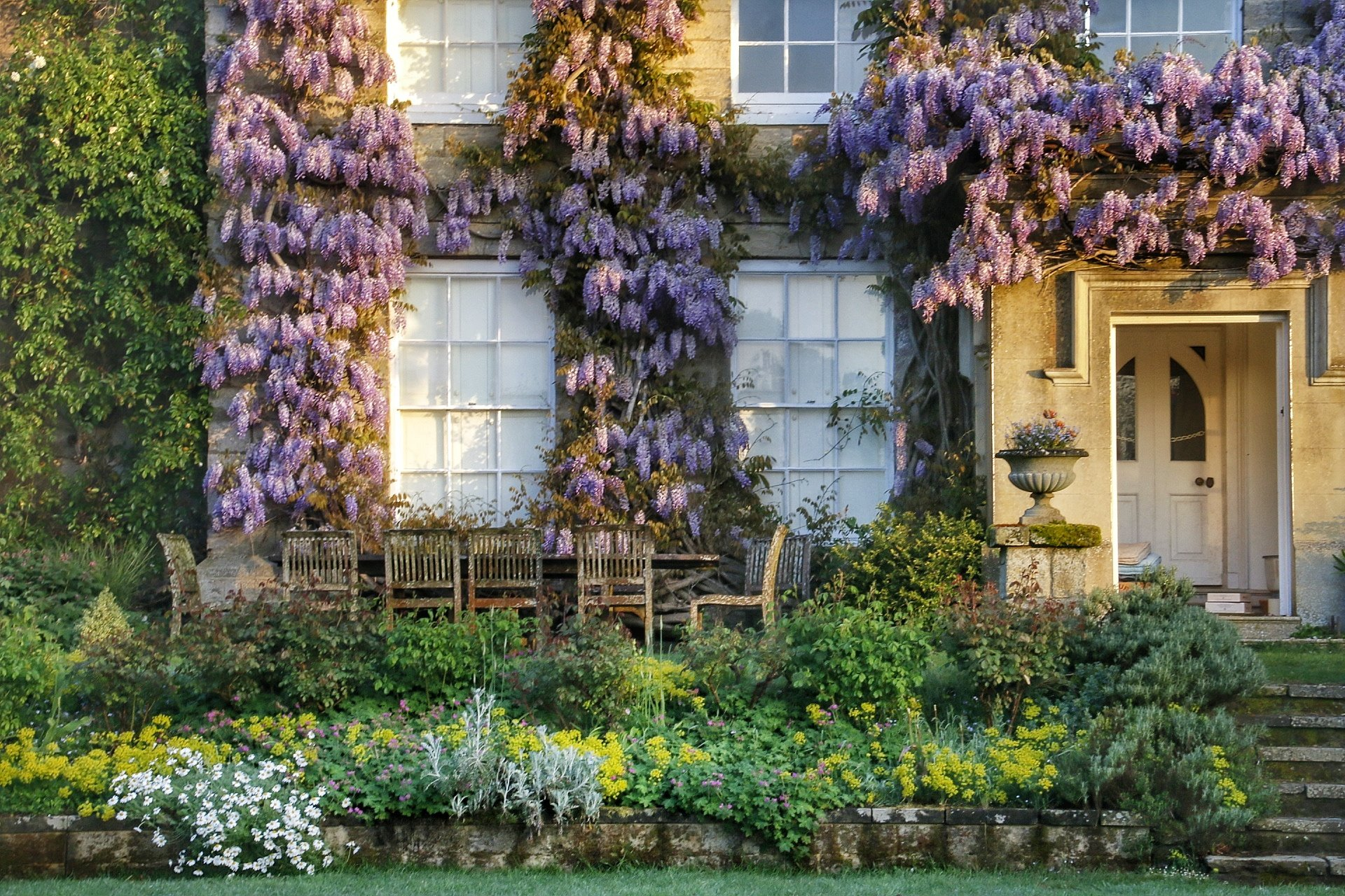 Wisteria sinensis at Fittleworth House, West Sussex