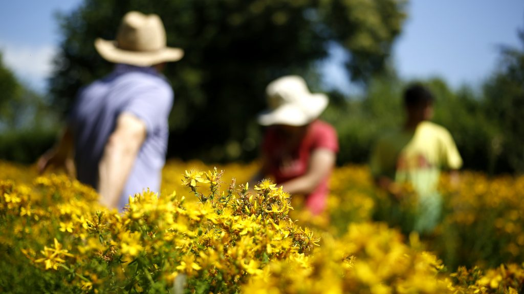 Herbfarmacy opens for the National Garden Scheme